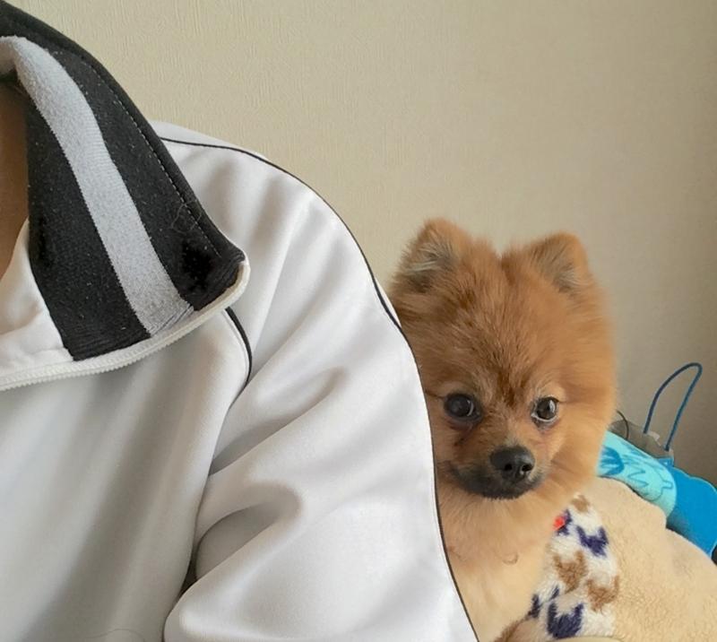 f:id:pon_ishikawa:20170321213410j:plain