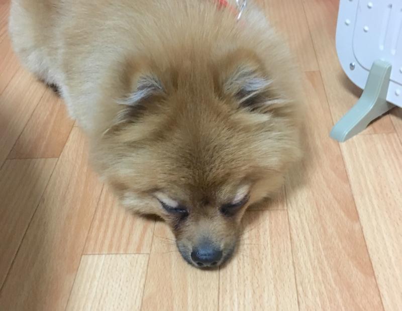 f:id:pon_ishikawa:20170327223353j:plain