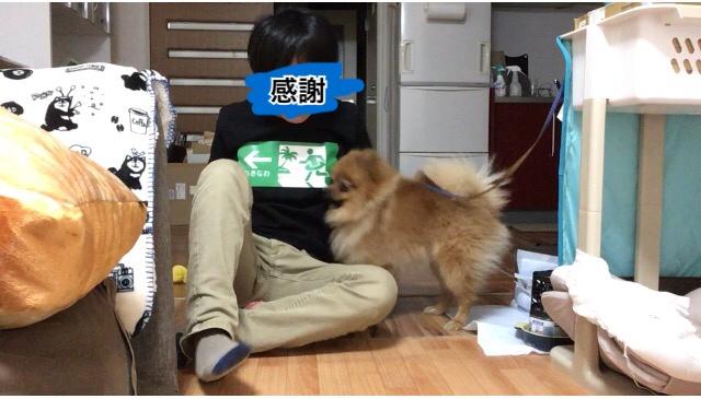 f:id:pon_ishikawa:20170523192214j:plain