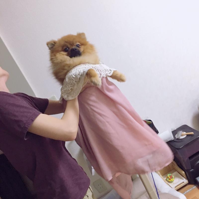 f:id:pon_ishikawa:20170703172547j:plain
