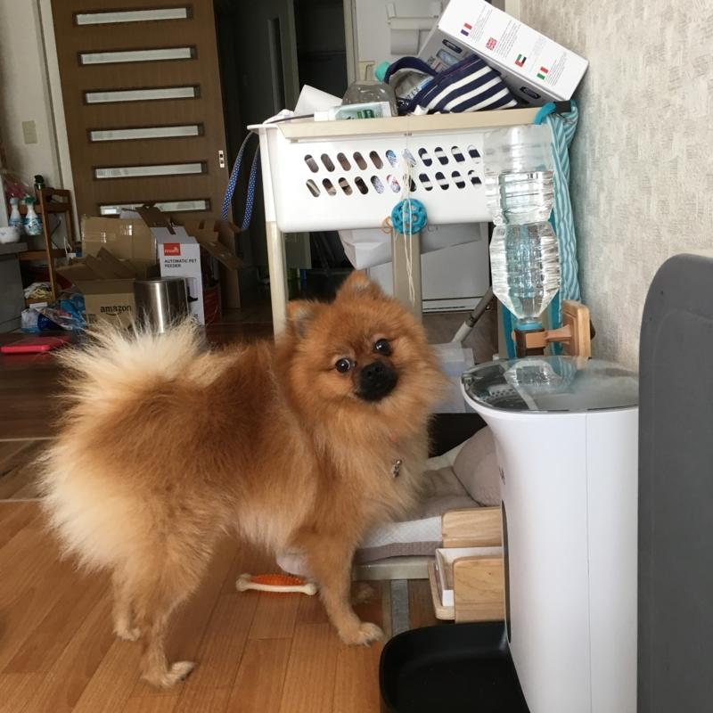 f:id:pon_ishikawa:20171004113043j:plain