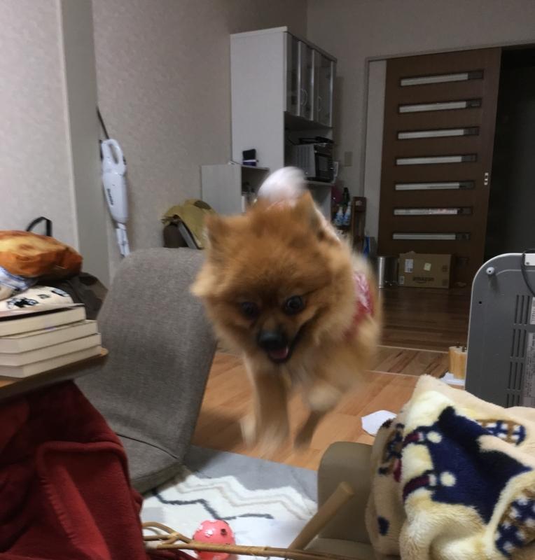 f:id:pon_ishikawa:20171028185153j:plain