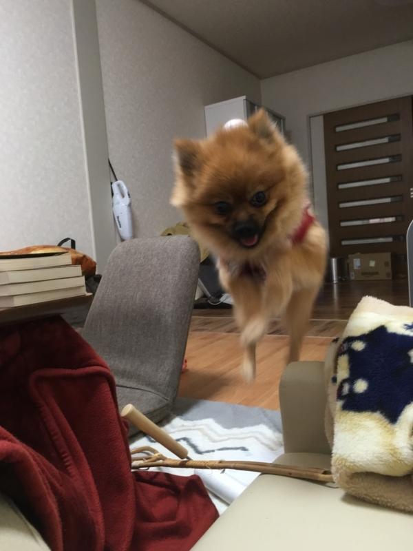 f:id:pon_ishikawa:20171028185252j:plain