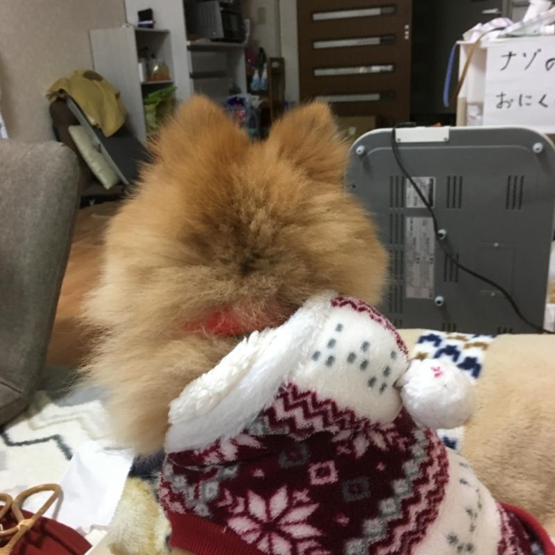 f:id:pon_ishikawa:20171102210351j:plain
