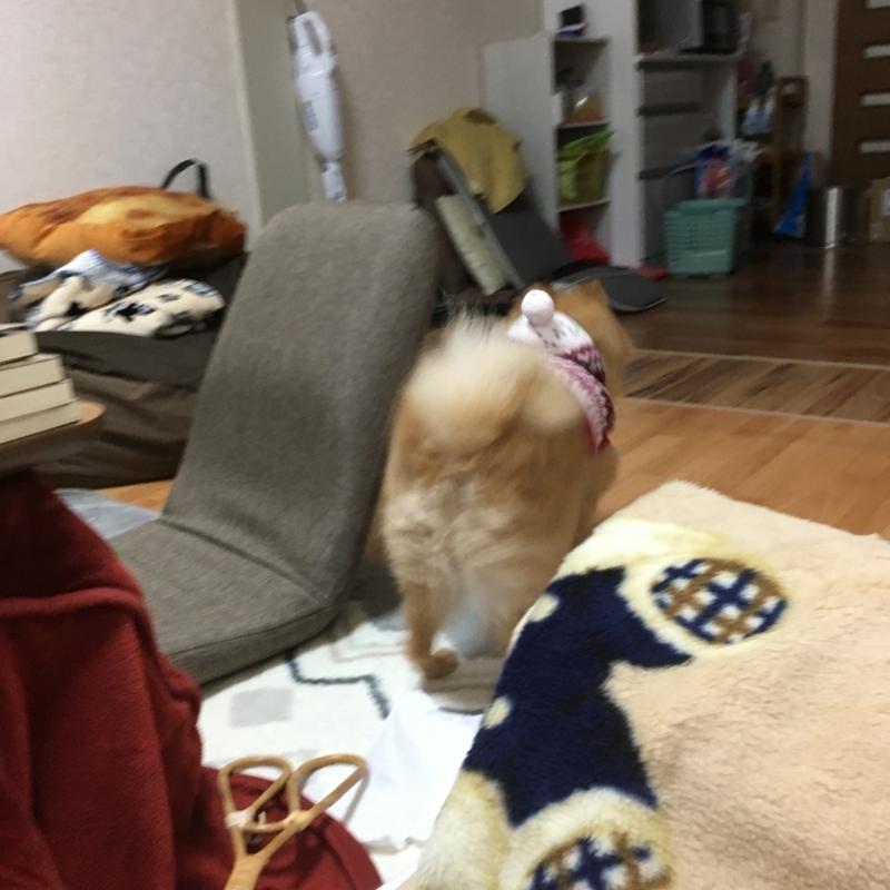 f:id:pon_ishikawa:20171102210400j:plain