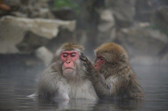長野県民 長寿 理由