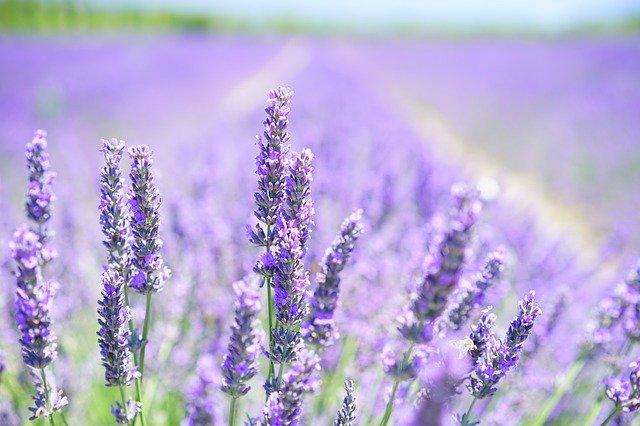 自然の優しい香りでリラックス