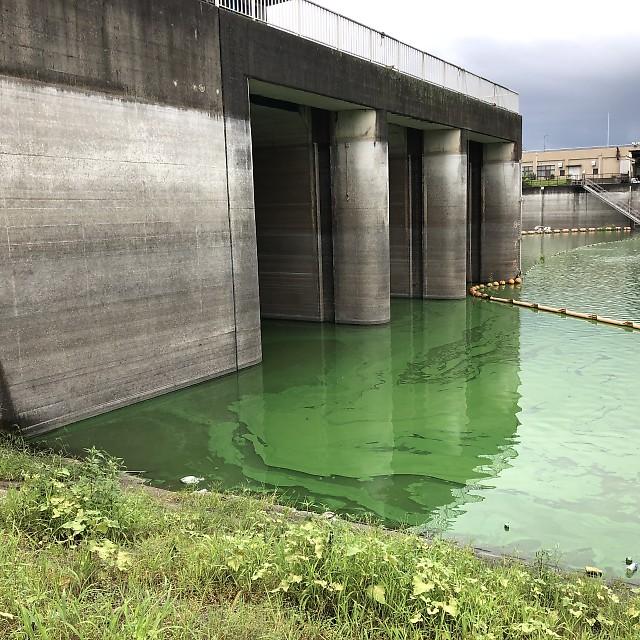 権現堂川(行幸湖)行幸給排水機場