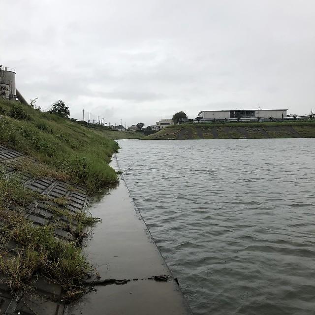 雨の権現堂川