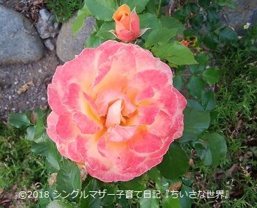 f:id:ponkotsu1215:20180517231647j:plain