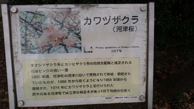 f:id:ponkotsuseacer:20170226123327j:image