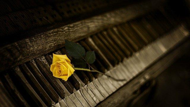 黄色いバラとピアノ