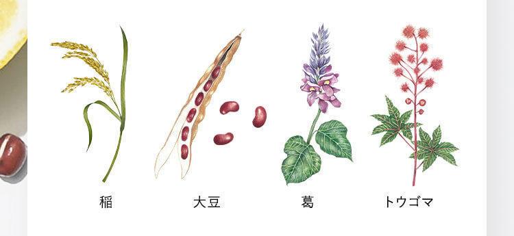 ボタニストプレミアムライン植物
