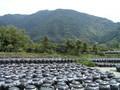 福山黒酢醸造所のアマン壺