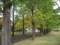 色づくイチョウの並木道