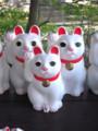 豪徳寺にて 招き猫の御堂