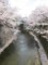 板橋より石神井川の下流を望む