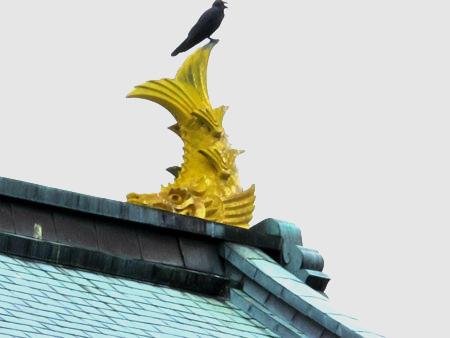 鯱に留まるカラス 松前城天守