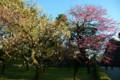 江戸城の梅花