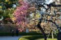 江戸城の梅