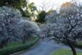 梅咲き誇る江戸城趾