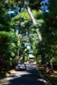 豪徳寺の参道