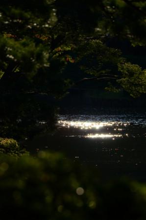 六義園の水面