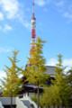 増上寺境内より 東京タワーを望む