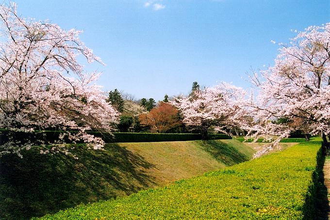 佐倉城址公園
