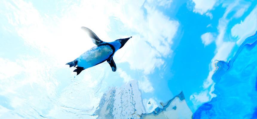 空飛ぶペンギンに会いたくて サンシャイン水族館
