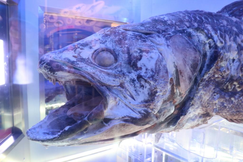 シーラカンス沼津港深海水族館