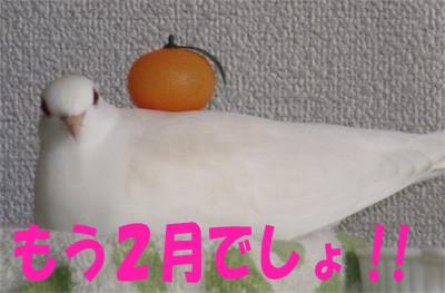 f:id:popo_gin:20120209180008j:image