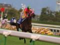 [20091115][競馬][京都競馬場][京都競馬場20091115][2009エリザベス女王杯]PB150847.JPG