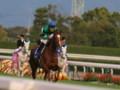 [20091115][競馬][京都競馬場][京都競馬場20091115][2009エリザベス女王杯]PB150889.JPG