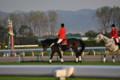 [20091121][競馬][京都競馬場][京都競馬場20091121]