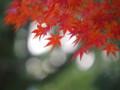 [20091128][競馬][京都競馬場][京都競馬場20091128]