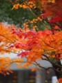 [20101128][紅葉][京都競馬場][京都競馬場20101128]PB280384.JPG