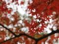 [20101128][紅葉][京都競馬場][京都競馬場20101128]PB280385.JPG