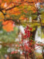 [20101128][紅葉][京都競馬場][京都競馬場20101128]PB280387.JPG