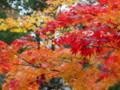 [20101128][紅葉][京都競馬場][京都競馬場20101128]PB280388.JPG