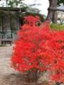 [20101128][紅葉][京都競馬場][京都競馬場20101128]PB280052.JPG