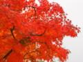 [20101128][紅葉][京都競馬場][京都競馬場20101128]PB280393.JPG