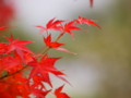 [20101128][紅葉][京都競馬場][京都競馬場20101128]PB280394.JPG