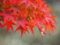 [20101128][紅葉][京都競馬場][京都競馬場20101128]PB280395.JPG