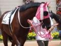 [20110723][競馬][京都競馬場][京都競馬場20110723]P7230425.JPG