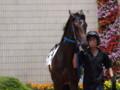 [20110723][競馬][京都競馬場][京都競馬場20110723]P7230449.JPG
