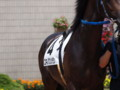 [20110723][競馬][京都競馬場][京都競馬場20110723]P7230461.JPG