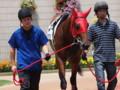 [20110723][競馬][京都競馬場][京都競馬場20110723]P7230465.JPG