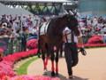 [20130526][競馬][京都競馬場][京都競馬場20130526]P5260243.JPG