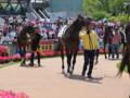 [20130526][競馬][京都競馬場][京都競馬場20130526]P5260254.JPG